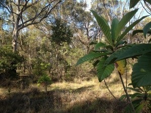Bushland areas must be included in planning for new housing land releases.