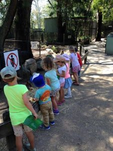 Macarthur Homeschooling Families excursion to Featherdale Wildlife Park.