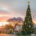 Camden Council - Christmas Tree