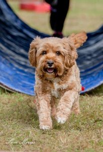 Paws in the Park will; be on Sunday, May 7 this year.