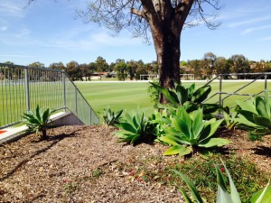 Raby Oval is ready to host the cricket competition of the 2014 Australian University Games.